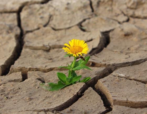 Thrive in spite of it.  Joel Osteen